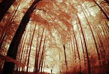 Fotografia Ispiratrice / Raccolta di pin sulla Fotografia Ispiratrice