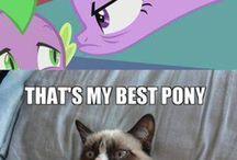 grumpy cat and my little pony
