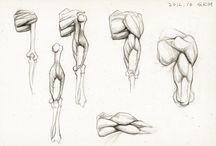 Anatomy - Arm