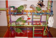 Parrot Playgyms