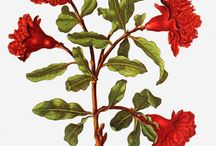 Maria-Sybilla Merian / by Art Cove Greeting Cards and Blog