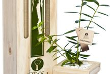 Boxed Trees by Trees Please! / Beautifully packaged sapling specimen trees delivered within NZ.
