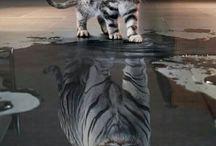 Katt  - tigret