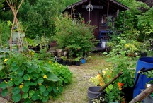 Cottage Garden / Welcome to the permaculture cottage in the west of Ireland. This 3 acre series of gardens was created from impossible terrain into what you see today, using permaculture design principles and love for the Earth.