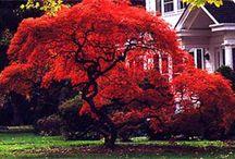 Bungendore garden