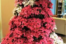 Holiday Princettia Display / Santa Brings Beam Suntory Beautiful Princettia Displays  / by Suntory Flowers