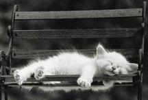 meow board