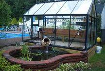 Aquaphonics l Home grow l Green house growing