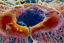 Microscopic sense organs
