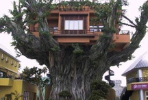 Tree Houses & More / by Marie Garza