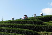 Comins Tea House Tea Travels / We personally source our fine loose leaf teas - here are a few images from our travels!