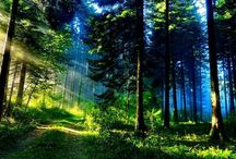 Beautiful Woods / forrest
