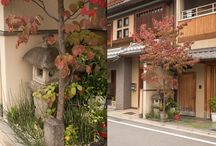 Os verdes do Japão | Gardens in Japan