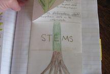 Plants/habitats topic