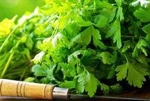 Şifalı Bitkiler / Şifalı bitkilerin özellikleri bu kategorimizde yer almaktadır.