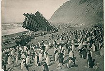 Penguins of Antarctica / ppppppppenguins!