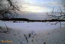 Pepper @ Druinense Duinen / I had a wall in the snow with my sisters' dog called Pepper. Made some great pictures