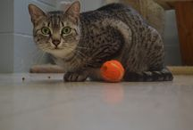 Cats and Kittens  / Feline friends who stay at Cowboy Kennels