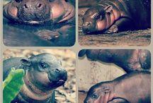 Adorable animals I love / by Samantha Espinosa