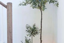 Plantesamling
