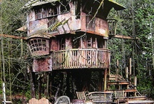 Cool places to live / Treehouse