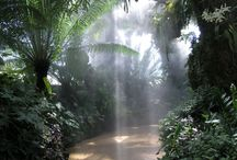 Jungles,yes I love them / by Cheryl Lans