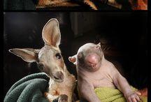 Schattige dieren / animals