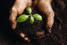 Organic Gardening / Growing green and clean.