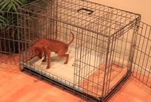 Dog House Training / House Training a Puppy or Dog? We have the solution. It's fast and easy! Share our page with anyone needing to house train a puppy or dog. For more housetraining details, please visit our website: ModernPuppies.com