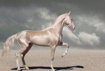かっこいい馬の画像集