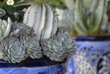 {succulent+cactus♥}