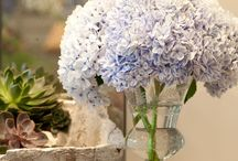 Hydrangeas!  (What more is there to say?)