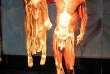 Body Worlds: Pulse