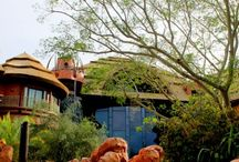 Disney's Animal Kingdom Lodge / One of my favorite Disney resorts, Disney's Animal Kingdom Lodge, features exotic decor. This deluxe resort is a wonderful hideaway for a weekend or week-long stay. Check it out!
