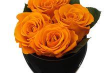 Roses Bonheur Loves / The most beautiful luxury roses...followed by beautiful luxury jewelry ;)  / by Bonheur Maison