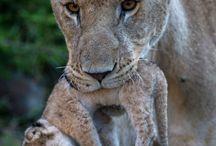 Hayvan fotoğrafçılığı