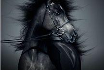 Equine fun
