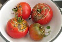 Gardening & Remedies