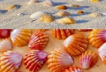 Beautiful beaches with sea shells & glasses