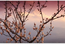 Primavera!