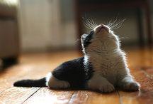 Kitty Cats / by Nicole DeLeon