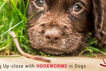 Dog Care / CanadaVetExpress - Online Pet Supplies Shop to get Flea and Tick, Heartwormers, Joint Care, Wormers at Best Price and Free Shipping.