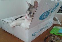 Amigos de UpandScrap / Colaboradores, blogueras, clientas, mascotas... ¡todos los amigos de UpandScrap tienen cabida en este álbum! Envíanos tus fotos a info@upandscrap.com :)