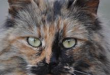 Cats Photo / Cats Cats Cats