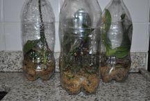 uti orquideas