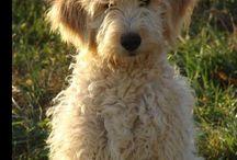 my love: dogs / by Addisyn Kuhn