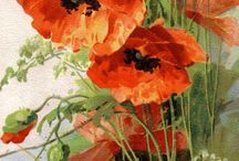 Poppies - loved flowers