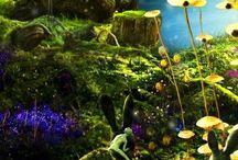 Enchanted Wonderland