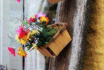 gradina, flori