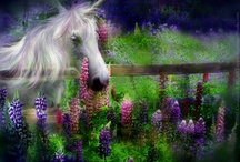 Enchanted!